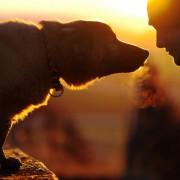uomo_cane
