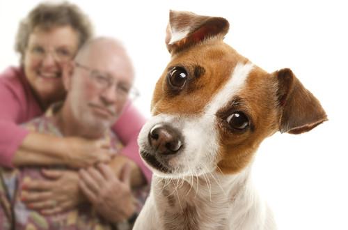 Vivere-con-un-cane-500x330