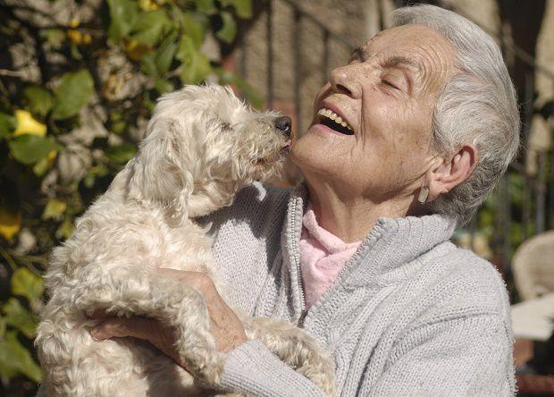 cane-anziani
