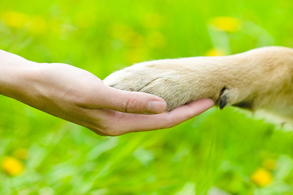 il-cane-shutterstock_MGZOOM