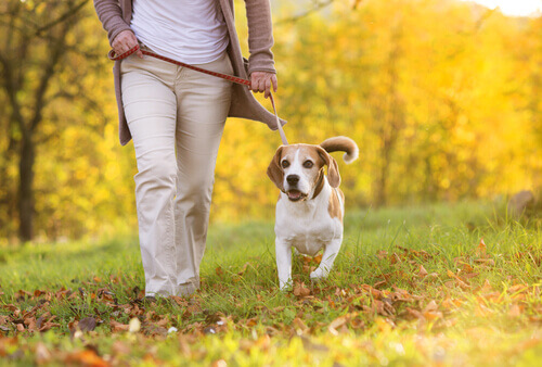 passeggiando-cane