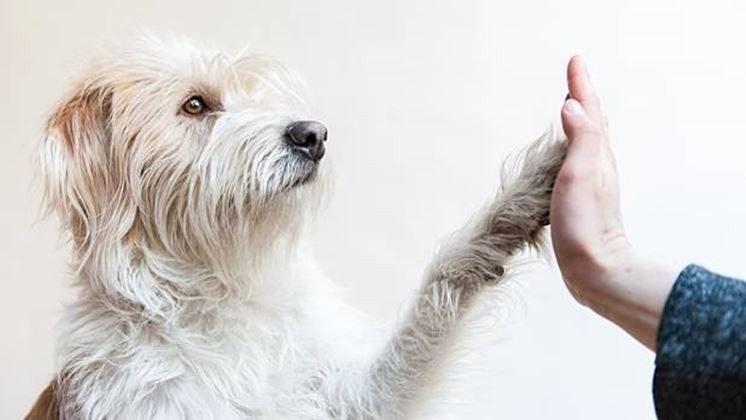 vita-migliore-con-un-cane_NG1