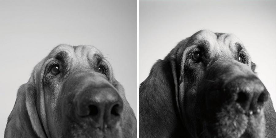 vitadacane-5dog