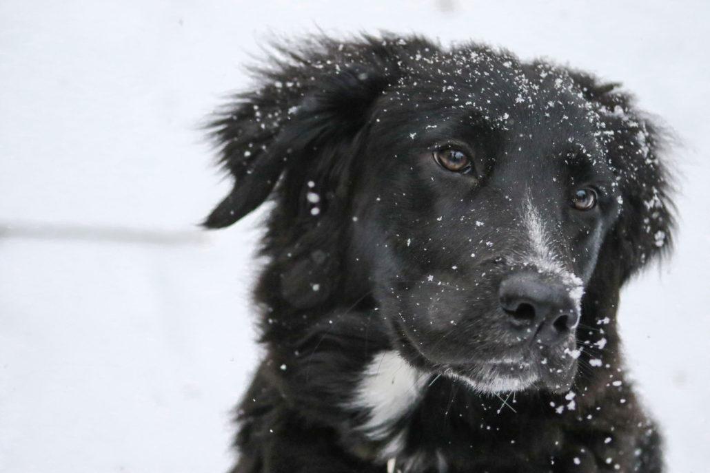 I Cani Soffrono Il Freddo Vita Da Cane Consigli Per Vivere Bene