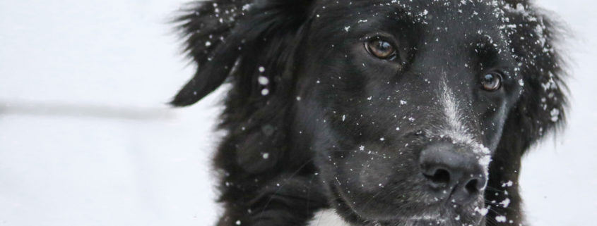 I-cani-soffrono-il-freddo?